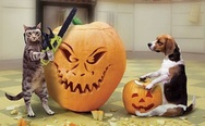 Cat and dog preparing to Halloween