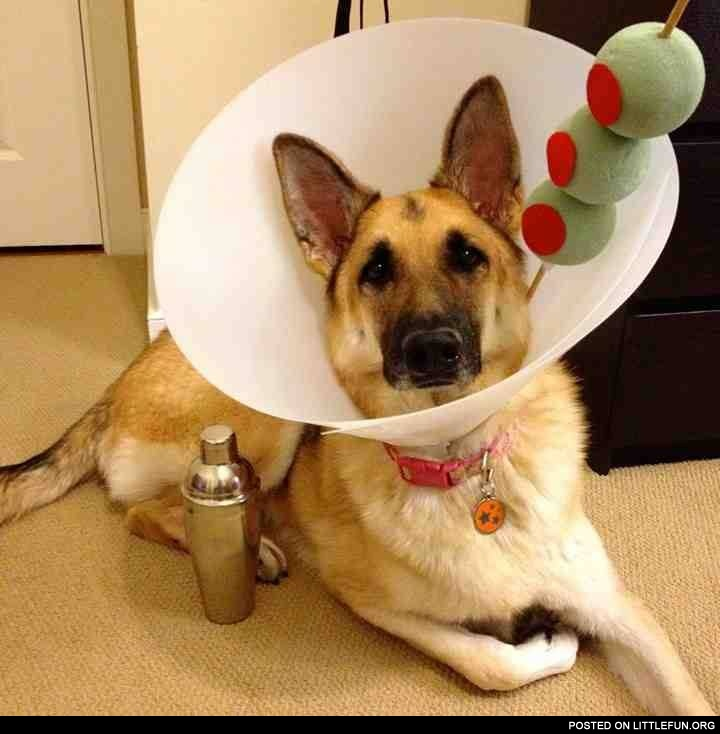 LittleFun - Martini dog: littlefun.org/posts/martini-dog