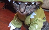 Cat in a dragon costume