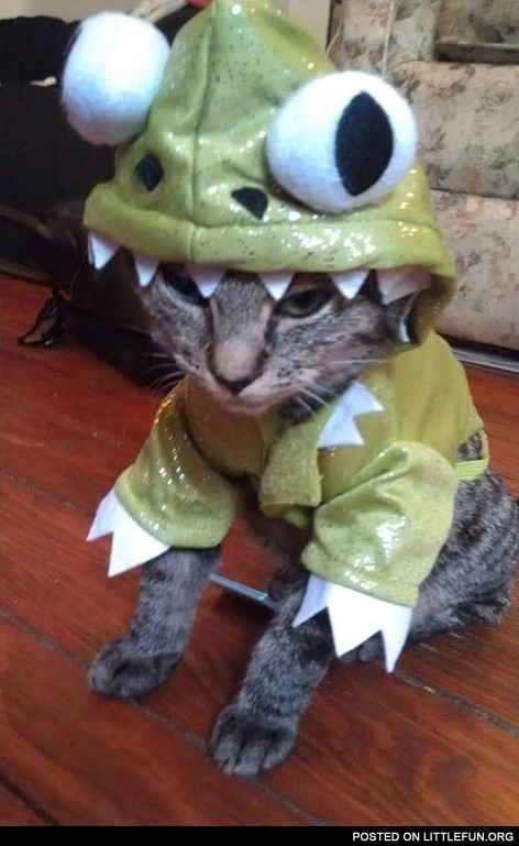 Cat in a dragon costume & LittleFun - Cat in a dragon costume