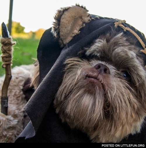 Halloween costume for dog Ewok & LittleFun - Halloween costume for dog Ewok