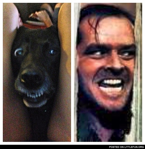 The Shining dog
