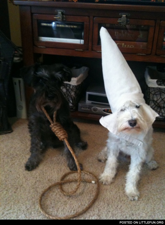 Halloween costumes for my dogs. (I'm black feel free to laugh, cause its a f**kin joke)