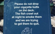 The fish and the cigarette butts