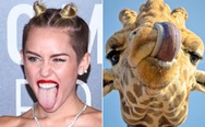 Miley Cyrus' and giraffe's tongue