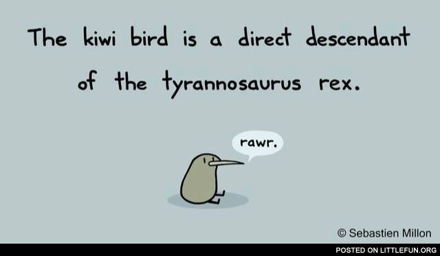 The kiwi bird is a direct descendant of the tyrannosaurus rex