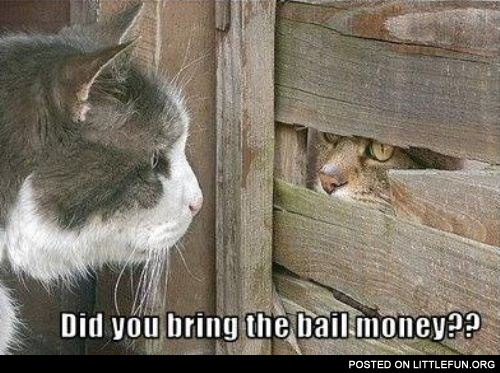Did you bring the bail money?