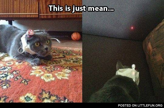 A cat with a laser pointer on his head