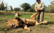 Lion massage