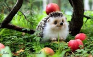 Happiest hedgehog ever.