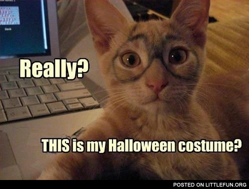 Really? This is my Halloween costume?