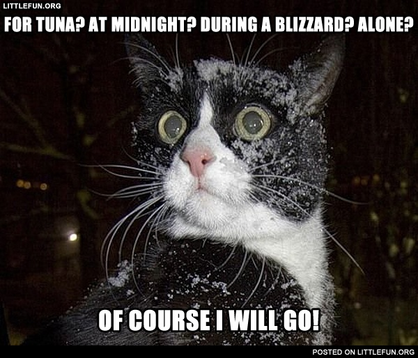 For tuna? At midnight? During a blizzard? Alone? Of course I will go!