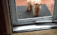 A dog helps his friend to get inside the house.
