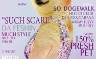 Vogue? No. Doge.