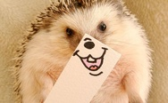 Smiling hedgehog Marutaro.