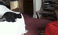 Cat jumping onto bean bag.