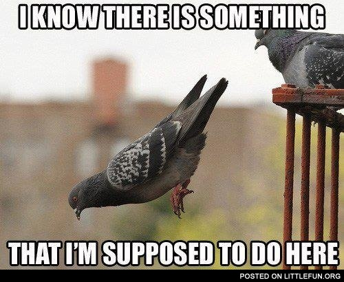 Funny pigeon. I know there is something that I'm supposed to do here.