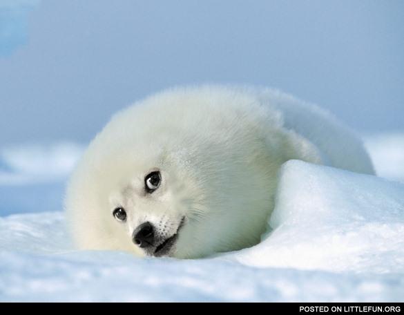 Littlefun Doge Seal