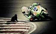 Cat on the moto track.