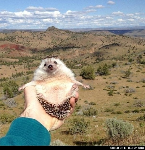 Happy hedgehog Biddy.