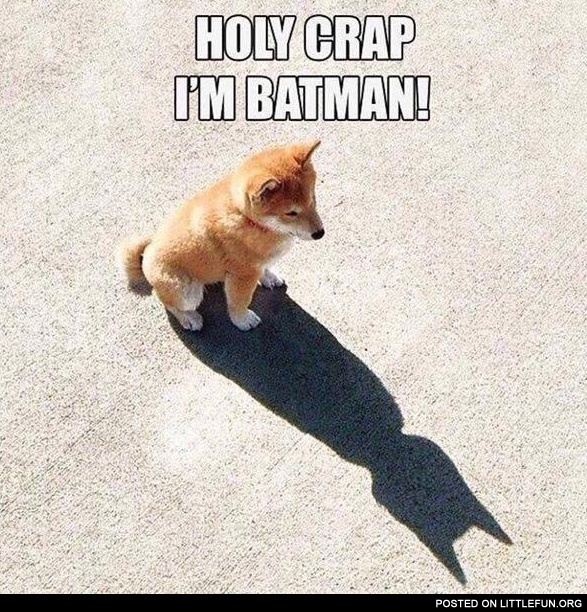 Holy c**p, I'm batman! Doge.