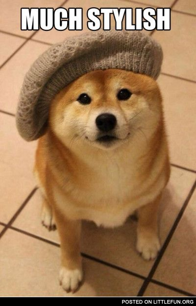 Doge in the hat. Such wow, much stylish.
