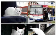 Mystery cat takes regular bus to the shops.
