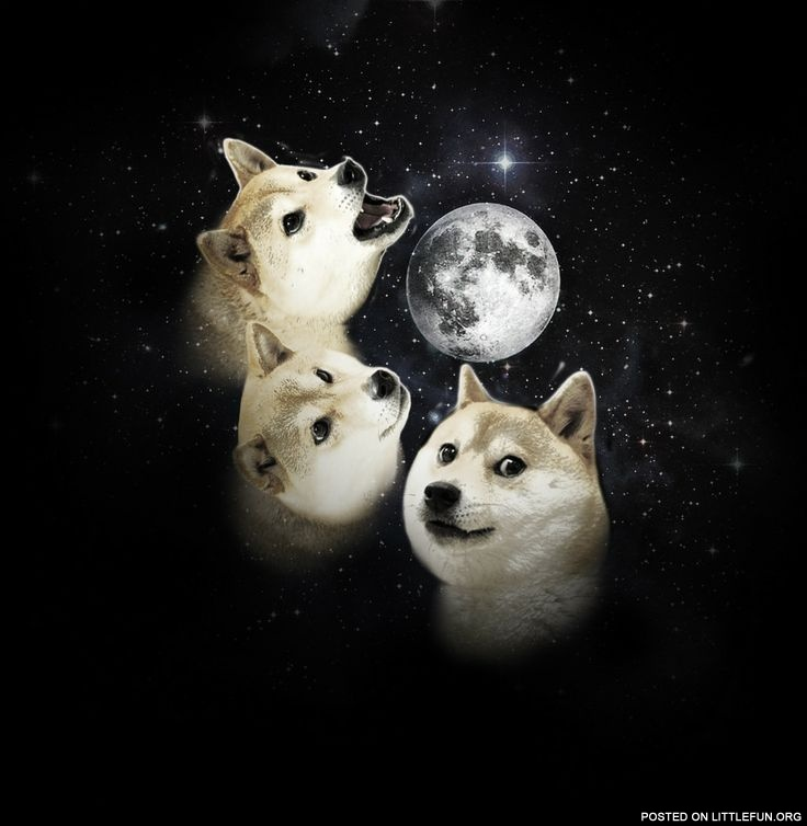 Doge and the Moon.