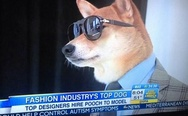 Fashion industry's top dog.