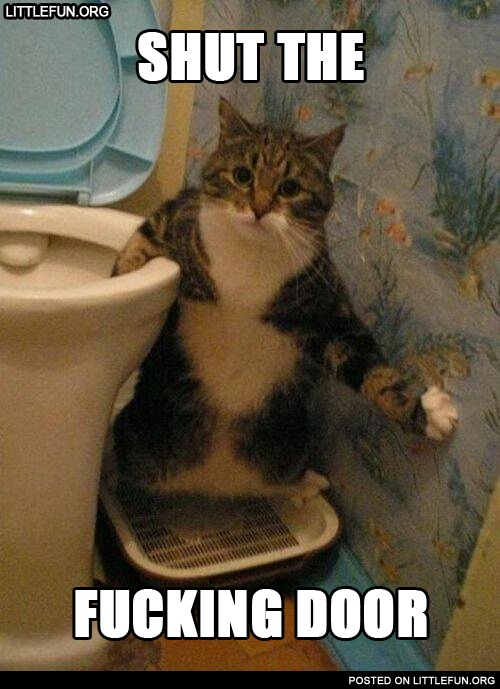Shut the f**king door. Cat in the toilet.