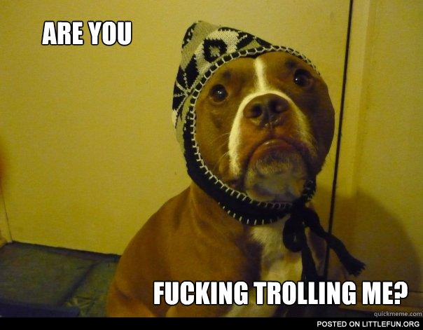 Are you f**king trolling me? Dog in the hat.