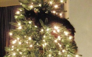 My mom sent me photos of her new Christmas tree. That cat seems to approve.
