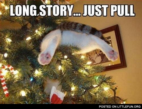 Long story, just pull. Christmas cat.