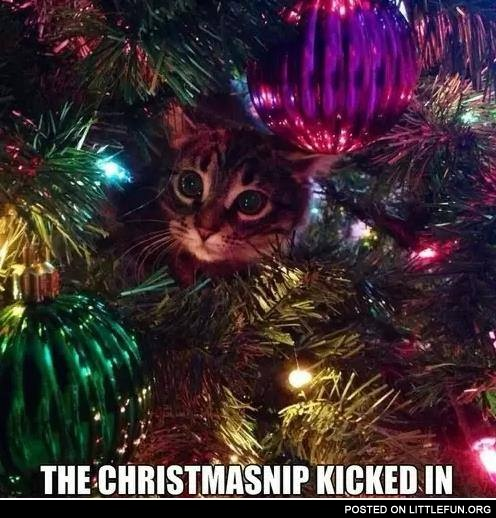 Th christmasnip kicked in.