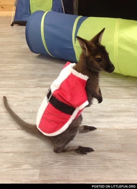 Meanwhile in Australia. Santaroo.