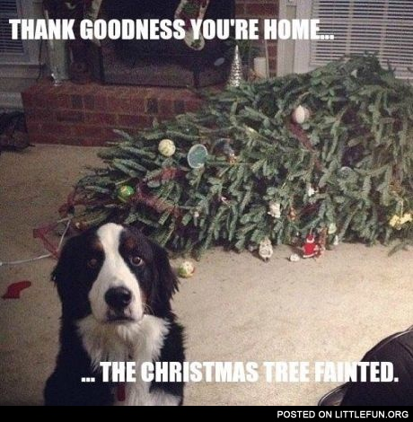 Thank Goodness you're home. The Christmas tree fainted.