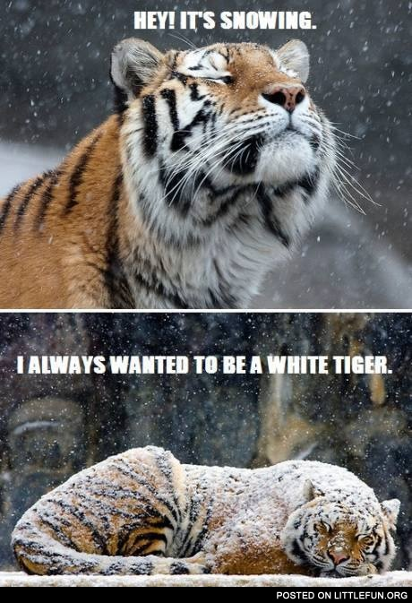 Hey! It's snowing. I always wanted to be a white tiger.